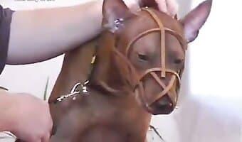 Prodigious babe fucking my dog bestiality