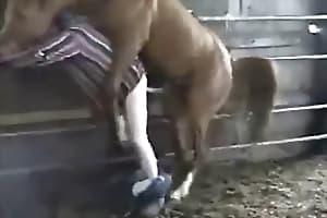 pony porn
